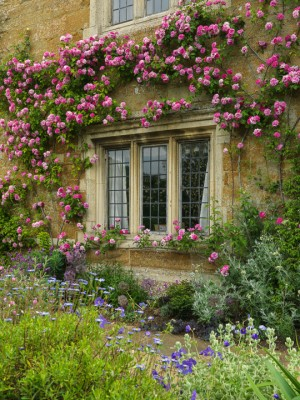 wpid16337-Summer-at-Coton-Manor-GCOT058-nicola-stocken.jpg