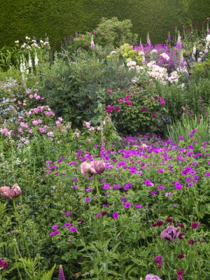 wpid16347-Summer-at-Coton-Manor-GCOT067-nicola-stocken.jpg