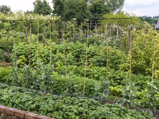 wpid16367-Summer-at-Coton-Manor-GCOT084-nicola-stocken.jpg