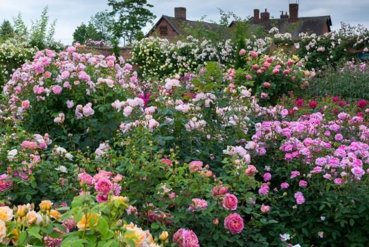 wpid16403-Combining-Roses-with-June-Perennials-GDAV082-nicola-stocken.jpg