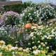 wpid16405-Combining-Roses-with-June-Perennials-GDAV083-nicola-stocken.jpg thumbnail