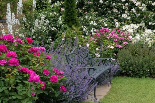 wpid16411-Combining-Roses-with-June-Perennials-GDAV088-nicola-stocken.jpg