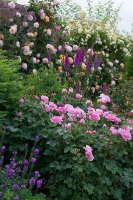 wpid16413-Combining-Roses-with-June-Perennials-GDAV093-nicola-stocken.jpg