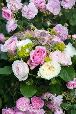 wpid16471-Combining-Roses-with-June-Perennials-GDAV142-nicola-stocken.jpg