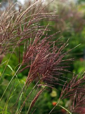wpid16776-Burrow-Farm-In-Autumn-OMIS067-nicola-stocken.jpg