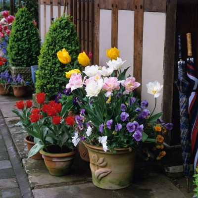 wpid16949-Spring-Tulip-Spectacular-GLIT017-nicola-stocken.jpg