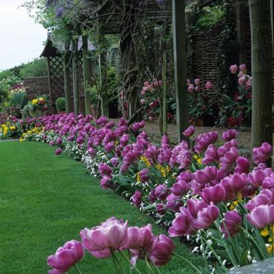 wpid16981-Spring-Tulip-Spectacular-GLIT038-nicola-stocken.jpg