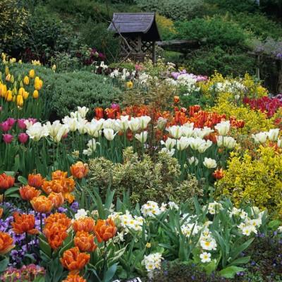wpid16989-Spring-Tulip-Spectacular-GLIT044-nicola-stocken.jpg