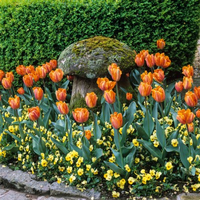 wpid17001-Spring-Tulip-Spectacular-GLIT051-nicola-stocken.jpg