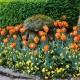wpid17001-Spring-Tulip-Spectacular-GLIT051-nicola-stocken.jpg thumbnail