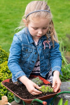 wpid17441-Child-Planting-Wheelbarrow-QCHI009-nicola-stocken.jpg