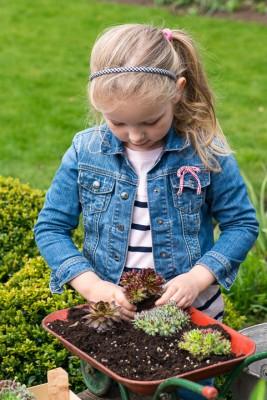 wpid17443-Child-Planting-Wheelbarrow-QCHI010-nicola-stocken.jpg