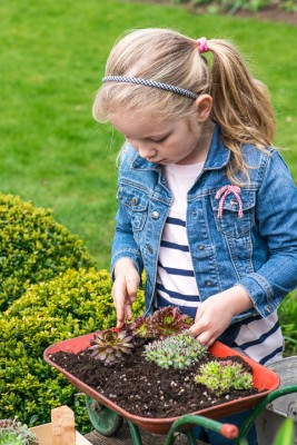 wpid17445-Child-Planting-Wheelbarrow-QCHI011-nicola-stocken.jpg