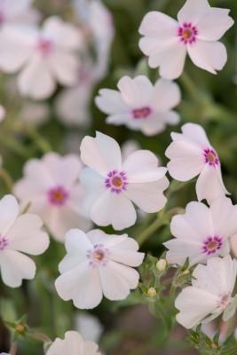 wpid17531-Child-Planting-Alpine-Bowl-QCHI088-nicola-stocken.jpg