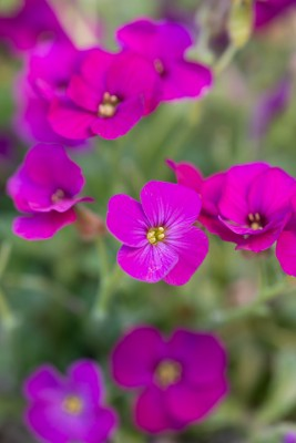 wpid17533-Child-Planting-Alpine-Bowl-QCHI089-nicola-stocken.jpg