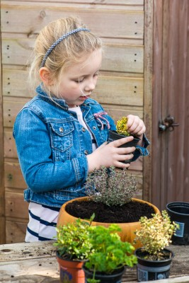 wpid17555-Child-Planting-Herb-Bowl-QCHI048-nicola-stocken.jpg