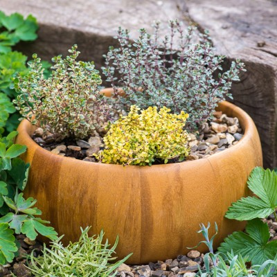 wpid17573-Child-Planting-Herb-Bowl-QCHI058-nicola-stocken.jpg