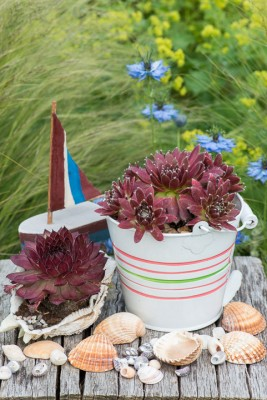 wpid17637-Childs-Seaside-Themed-Pots-QCHI156-nicola-stocken.jpg