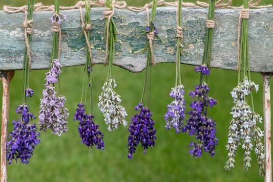 wpid17751-Lavender-Wand-Making-GORD149-nicola-stocken.jpg