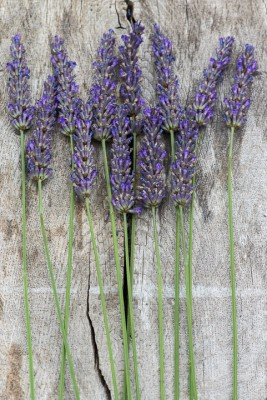 wpid17775-Lavender-Wand-Making-QCRA082-nicola-stocken.jpg