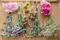 Thumbnail image for Picking and Drying Flowers