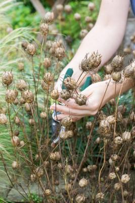 wpid17819-Picking-and-Drying-Flowers-QCRA164-nicola-stocken.jpg