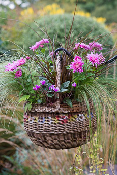 Thumbnail image for Hanging Basket in September