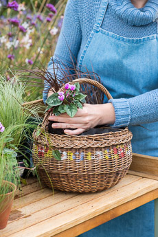 wpid17851-Hanging-Basket-in-September-thumb-QHAA191-nicola-stocken.jpg