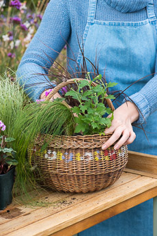 wpid17857-Hanging-Basket-in-September-thumb-QHAA194-nicola-stocken.jpg