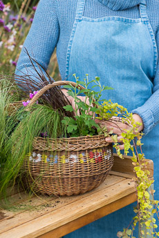 wpid17859-Hanging-Basket-in-September-thumb-QHAA195-nicola-stocken.jpg