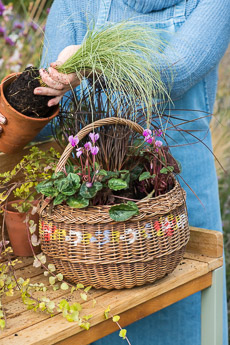 wpid17863-Hanging-Basket-in-September-thumb-QHAA197-nicola-stocken.jpg