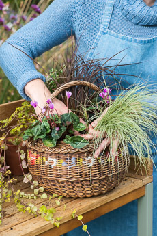 wpid17865-Hanging-Basket-in-September-thumb-QHAA198-nicola-stocken.jpg