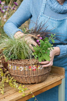 wpid17867-Hanging-Basket-in-September-thumb-QHAA199-nicola-stocken.jpg