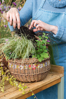 wpid17869-Hanging-Basket-in-September-thumb-QHAA200-nicola-stocken.jpg