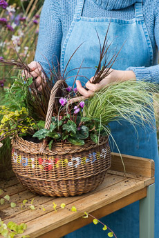 wpid17871-Hanging-Basket-in-September-thumb-QHAA201-nicola-stocken.jpg