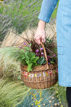 wpid17875-Hanging-Basket-in-September-thumb-QHAA203-nicola-stocken.jpg