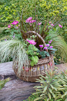 wpid17883-Hanging-Basket-in-September-thumb-QHAA207-nicola-stocken.jpg