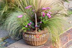 wpid17885-Hanging-Basket-in-September-thumb-QHAA209-nicola-stocken.jpg