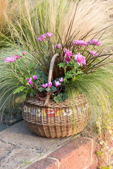 wpid17887-Hanging-Basket-in-September-thumb-QHAA210-nicola-stocken.jpg