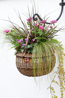 wpid17889-Hanging-Basket-in-September-thumb-QHAA211-nicola-stocken.jpg