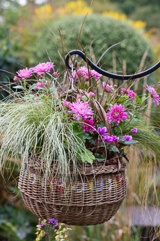 wpid17893-Hanging-Basket-in-September-thumb-QHAA215-nicola-stocken.jpg
