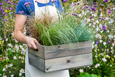 Thumbnail image for Planting a Drought Resistant Box