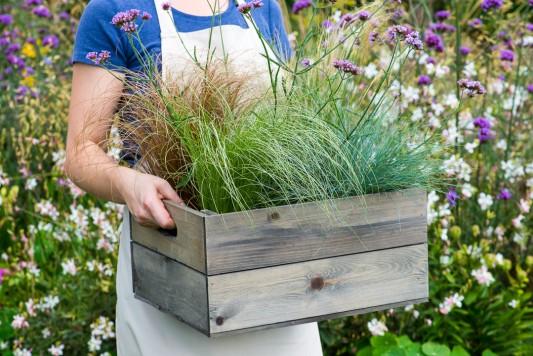 wpid17903-Planting-a-Drought-Resistant-Box-QCON319-nicola-stocken.jpg