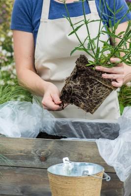 wpid17915-Planting-a-Drought-Resistant-Box-QCON325-nicola-stocken.jpg
