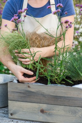 wpid17925-Planting-a-Drought-Resistant-Box-QCON330-nicola-stocken.jpg