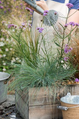 wpid17933-Planting-a-Drought-Resistant-Box-QCON334-nicola-stocken.jpg
