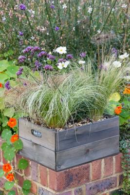 wpid17937-Planting-a-Drought-Resistant-Box-QCON336-nicola-stocken.jpg