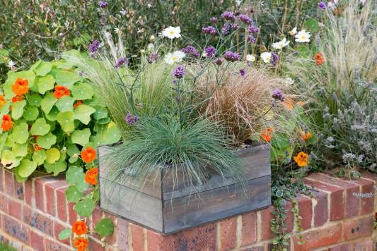 wpid17939-Planting-a-Drought-Resistant-Box-QCON337-nicola-stocken.jpg