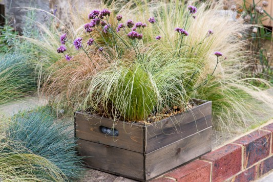 wpid17941-Planting-a-Drought-Resistant-Box-QCON338-nicola-stocken.jpg