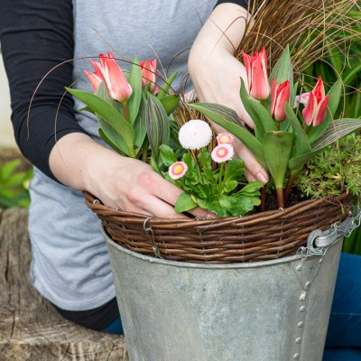 wpid17974-An-April-Hanging-Basket-QHAA086-nicola-stocken.jpg